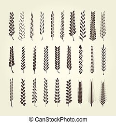 Wheat and rye spikelet collection in different style