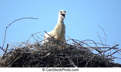 White stork nest bird - White stork standing in the nest on...