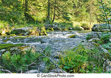 forest stream in summer