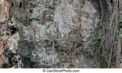 Lot of monkeys on a rock at cloudy day