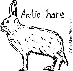 arctic hare - vector illustration sketch hand drawn with...