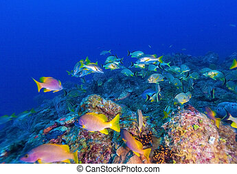 Underwater scene with a shoal of yellow tropical fish