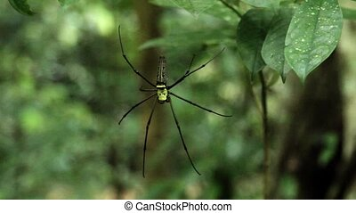 Big black and yellow spider in jungle forest