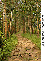 Walking Trail - Walking trail through the forest