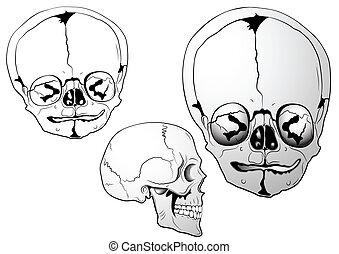 bizarre skull - Illustration of the bizarre skull
