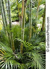 Bamboo garden - Landscape of tropical bamboo plant in garden