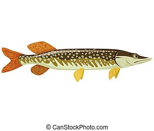 Big green pike - Vector illustration of a big green pike