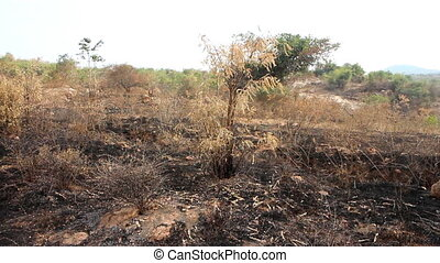 burn with fire ground in wild. scorched dry plains with...