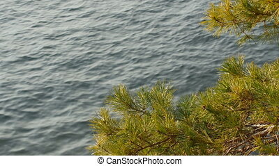 Pine branch sways in the wind against blue Lake Como surface.