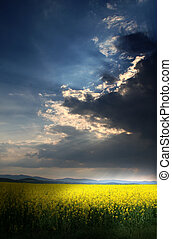 Storm above the rape field with sun behind the clouds