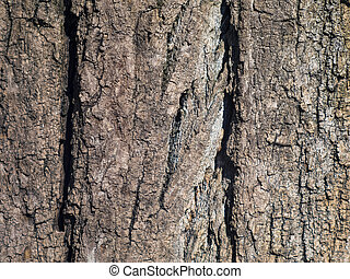 Texture of a huge tree bark