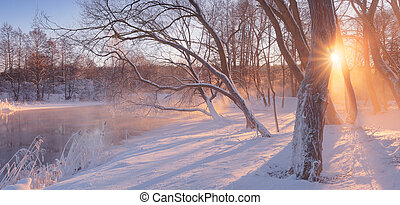 Sun shine through trees at whie snow - Winter sunrise in...