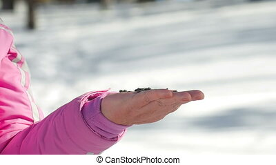 Birds in women's hand eat seeds - Nuthatch and small...