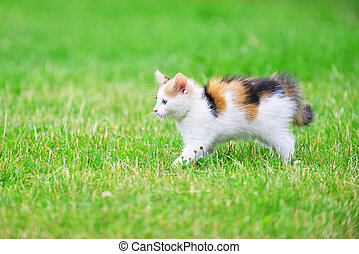 Motley cat playing on green grass