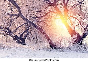 Sunny Christmas morning. Frosty winter morning. Bright...