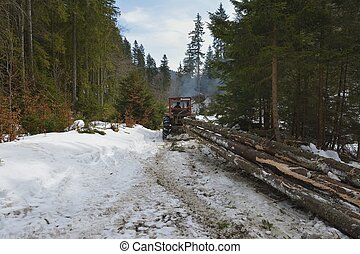 Skidding timber / Tractor is skidding cut trees out of the...