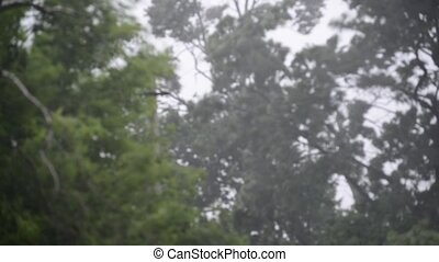 Hurricane winds and rain in summer - Hurricane winds and...