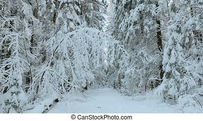 Snowy trees in the forest