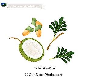Breadfruit, A Native Fruit in Solomon Islands - Solomon...