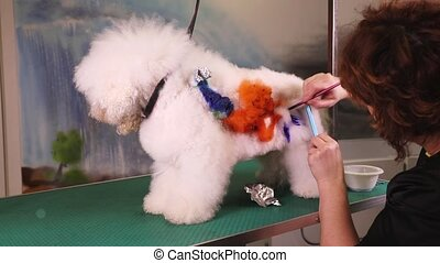 Creative art at pet salon - Dog groomer paints a dog (Bichon...