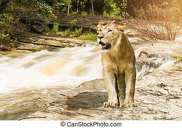 Lion Cataract of Mae Klang waterfall