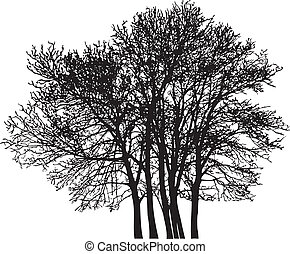 Group tree - Vector illustration of the deciduous trees