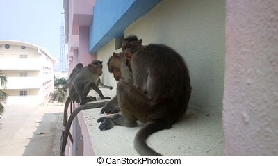 Monkey on ledge of multistory building 1. Problem of...