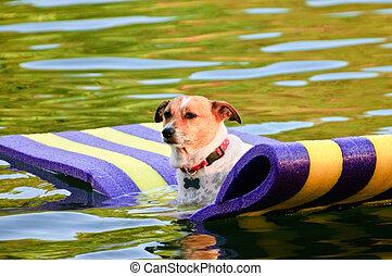 cão, flutuante, água
