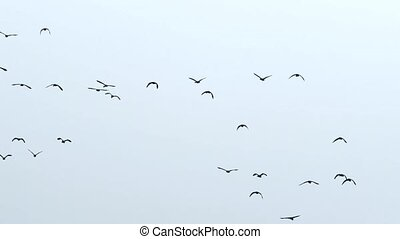 flock of birds in sky background
