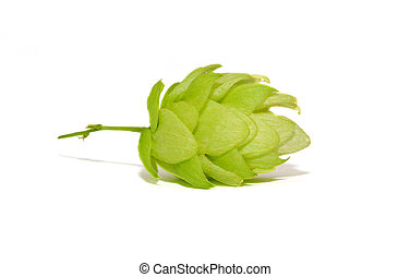 Close up view of single hop cone. Isolated on white.