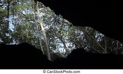 View on trees from cave at sunny day