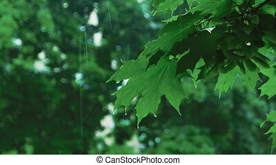 Rain in forest of green treesgreen tree branches under the...