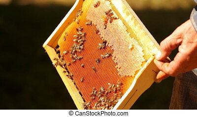 Honey in the apiary - A man checks the amount of honey in...