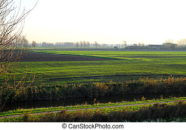 Green polder view in Sluis, Zeeland, the Netherlands, Europe