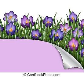 Purple crocus flowers - Illustration of border from purple...