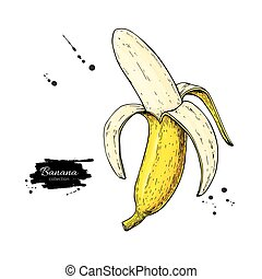 Banana vector drawing. Isolated hand drawn peel object on white