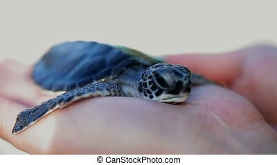 Turtle in woman's hands outdoors