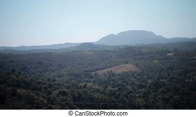 Jungle landscape view at sunny day