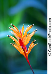 Photos bright orange flower on exotic island