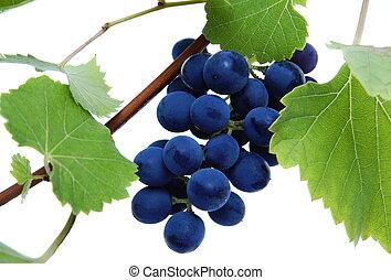 青, 群がりなさい, 葉, ブドウ