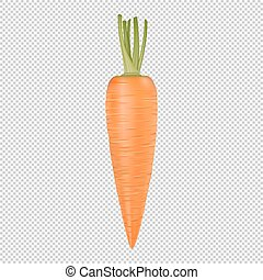 Isolated realistic vector carrot icon. Design template....
