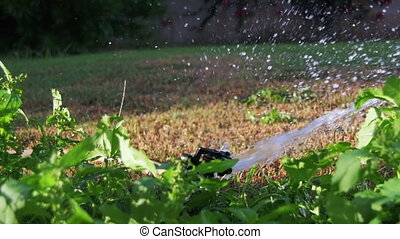 Automatic Lawn Sprinkle on the Garden Green Grass in Slow Motion