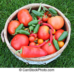 Harvest Basket of Tomatoes and Peppers