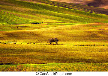 Tuscany panorama, rolling hills, fields, meadow and lonely...