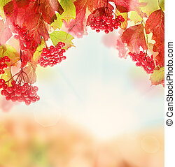Fall Nature Background with Red Berry, Autumn Leaves and Sun Light