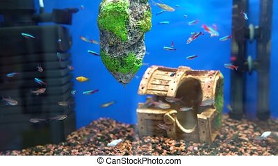 Fish swim in an aquarium - Different fish swim in an...