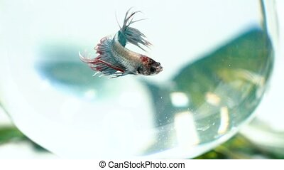 Fish swim in an aquarium - Beautiful fish swim in an...