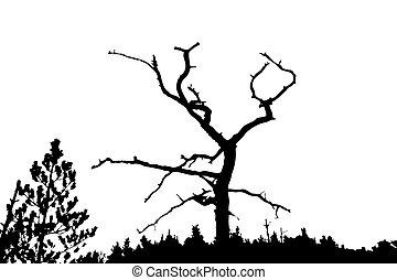 silhouette dry tree