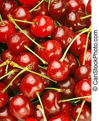 ramo, fresco, cerezas