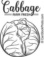 Hand drawn cabbage icon.